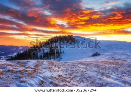 Majestic winter trees glowing by sunlight. Dramatic and picturesque morning wintry scene. Place location Carpathian national park, Ukraine, Europe. Beauty world. Warm toning effect. Happy New Year! - stock photo