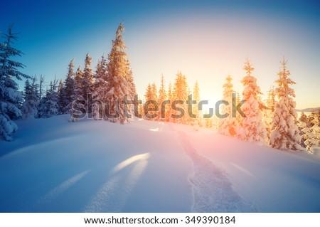 Majestic winter trees glowing by sunlight. Dramatic wintry scene. Location Carpathian national park, Ukraine, Europe. Alps ski resort. Beauty world. Instagram toning effect. Happy New Year! - stock photo