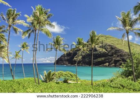 Makapuu Point with palm trees on Oahu, Hawaii - stock photo