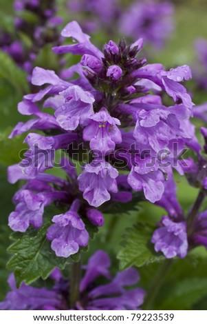 makro. herb. Traditional medicine - stock photo