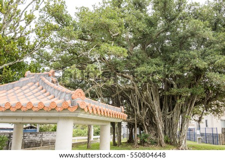 Malayan banyan tree and tiled roof arbour in Okinawa