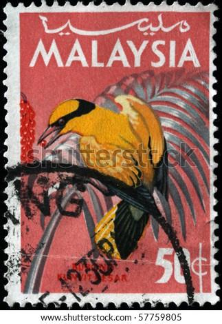 MALAYSIA - CIRCA 1965: A stamp printed in Malaysia shows Black-naped Oriole - Oriolus chinensis, circa 1965 - stock photo