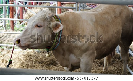 Malaysia, Dec 6, 2016 - The cow is planned in the exhibition of Agriculture in Serdang, Malaysia