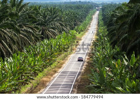 MALAYSIA - December 7, 2013: An open road in Malaysia with one car, surrounded by palm tree plantations and agriculture. - stock photo