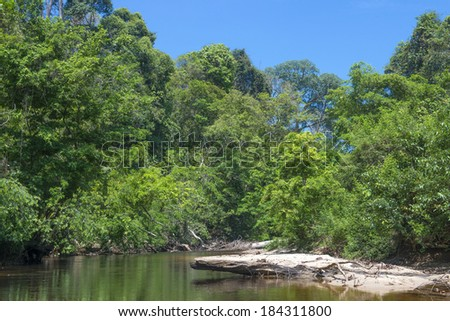 Malaysia Rainforest - stock photo