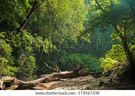 Malaysia Rainforest, Beautiful light in the morning - stock photo