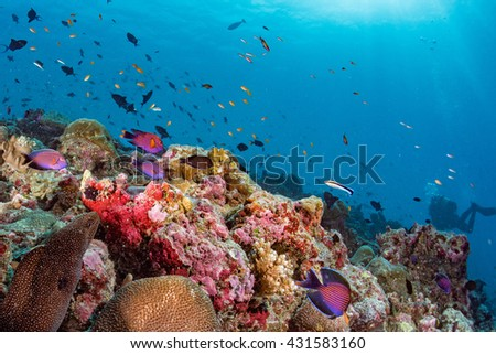 Maldives corals house for Fishes underwater landscape with eel mooray - stock photo