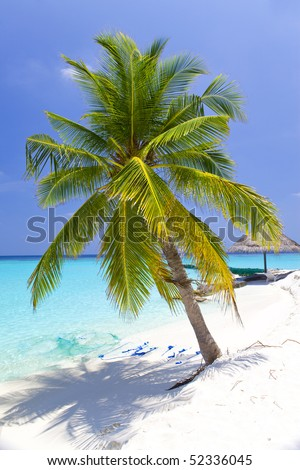 Maldives.  Palm tree bent above waters of ocean.