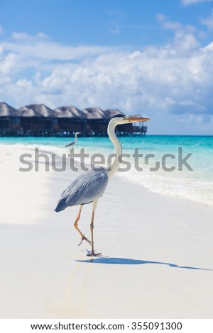 Maldives. view of the houses on the water. bungalow. expensive vacation. Paradise on earth. Indian Ocean. blue water. White sand. - stock photo