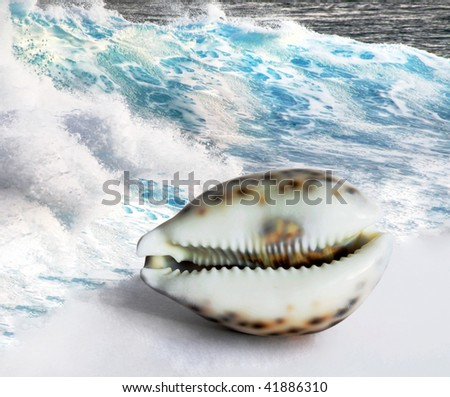 Maldivian Shell - stock photo