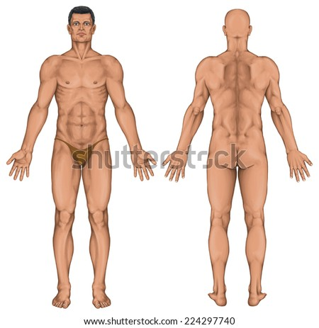 Male anatomical body, surface anatomy, human body shapes, human anatomy, anterior posterior view, full body - stock photo