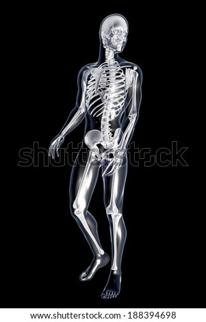 Male anatomy. 3D rendered illustration. Isolated on black. - stock photo