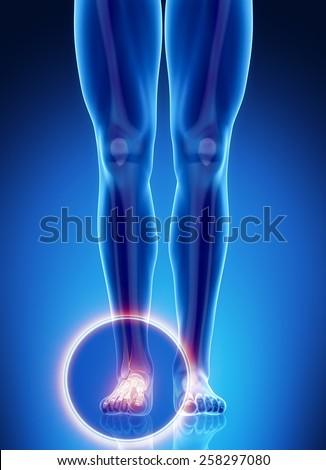 Male bone anatomy ankle - stock photo