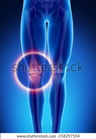 Male bone anatomy knee - stock photo