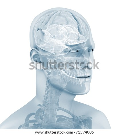 male brain - stock photo