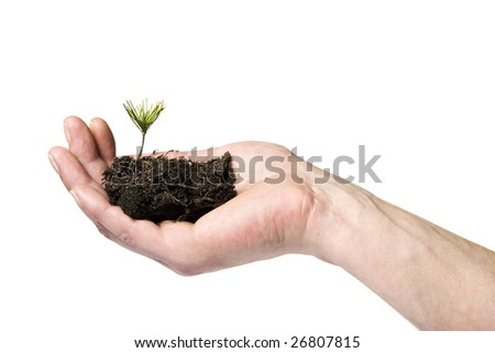 male caucasian right hand holding small pine sprout in soil, isolated on white