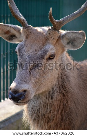 Male deer in a green fence