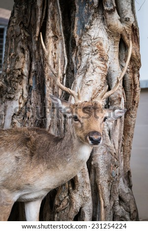 Male deer with beautiful antler - stock photo