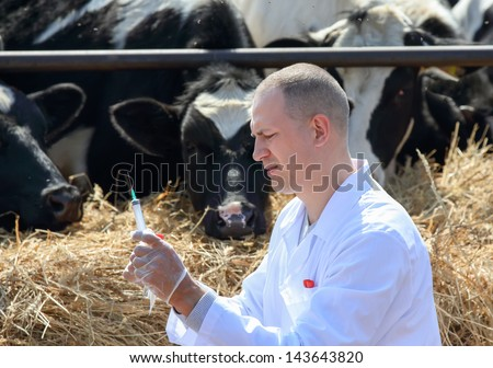male doctor holding a syringe on a background of a farm cows - stock photo