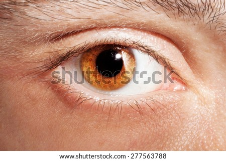 Male eye color of honey close up - stock photo