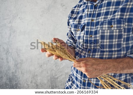 Male Farmer holding wheat straws. Agricultural Crop protection concept. - stock photo