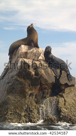Male & female Sea Lions, which are California Seals seen on the southern most point of Land's End at the tip of the Baja in Mexico.