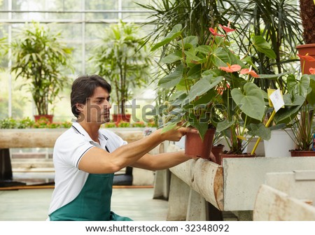 male florist arranging plants in flower shop - stock photo