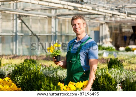 Male florist or gardener in flower shop or nursery greenhouse