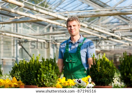 Male florist or gardener in flower shop or nursery greenhouse - stock photo