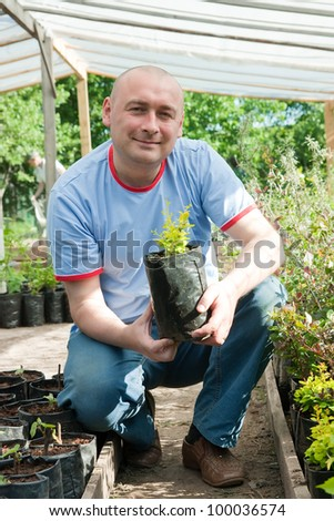 male gardener with seedlings in the greenhouse