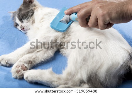 Male hand grooming cat.    - stock photo