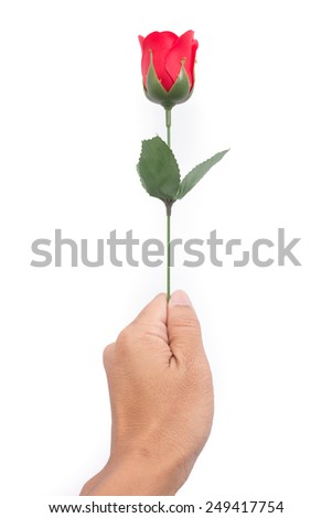 Male hand hold single red valentine rose on white background.