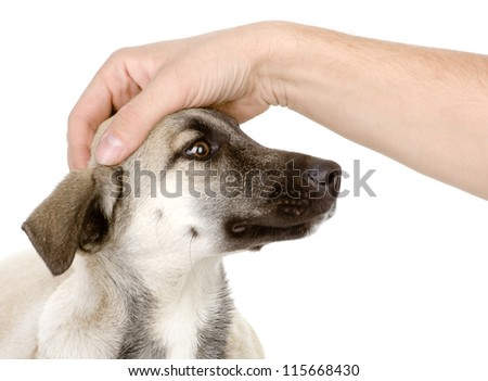 male hand patting  dog head. isolated on white background - stock photo