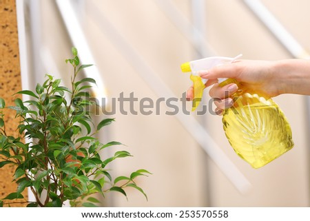 Male hand spraying flowers on light blurred background - stock photo