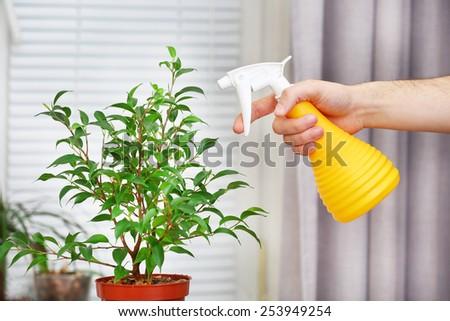 Male hand spraying flowers on white window background - stock photo