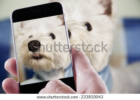 Male hand with smartphone taking a photo of a dog