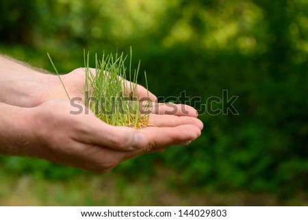 Male hands holding green growing plant over nature background. New life, spring and ecology concept