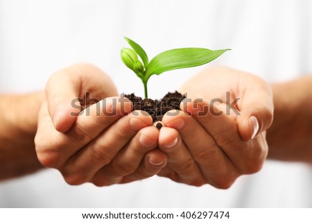 Male hands holding soil and plant, closeup