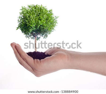 Male hands holding tree growing out of hand. Eco green energy saving in the future concept . - stock photo