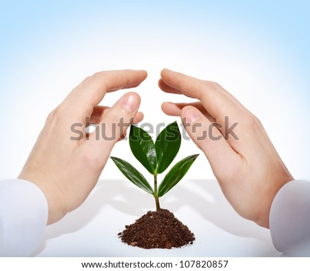 Male hands offering protection for a new sprout