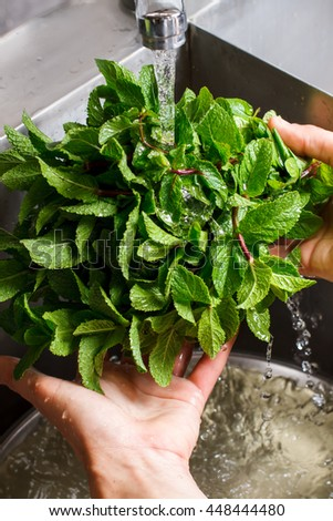 Male hands wash mint. Mint leaves under water flow. Fresh and fragrant. Cafe chef cleaning greenery. - stock photo