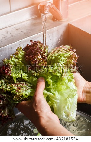Male hands washing red lettuce. Water flowing onto lettuce leaves. Fresh ingredient for healthy lunch. Delicious juicy greenery. - stock photo