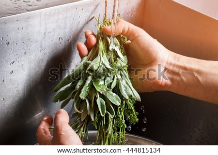 Male hands washing sage. Sage under flow of water. Thyme and sage for salad. Herbs from farmer's market. - stock photo