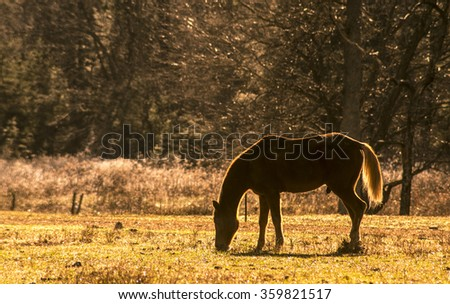 Male horse backlit by the sun in a field of grass.