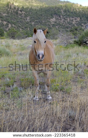 Male horse isolated on ranch with fence - stock photo