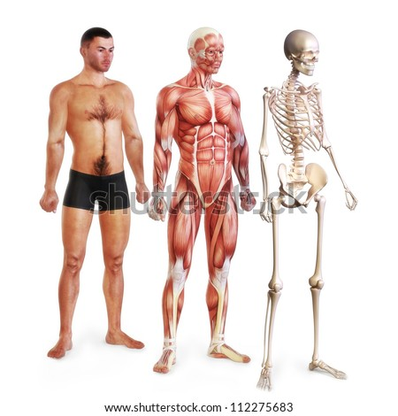 Male illustration of skin, muscle and skeletal systems isolated on a white background. 3d models. Female version also available.