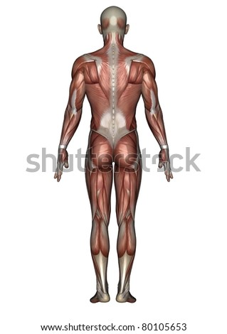 male lay figure