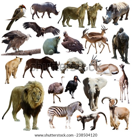 Male lion  and other African animals. Isolated on white background - stock photo