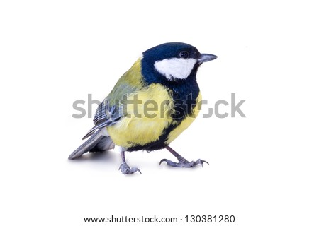 male of a titmouse on a white background - stock photo
