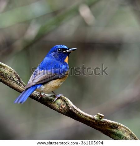 Blue and orange bird logo - photo#18